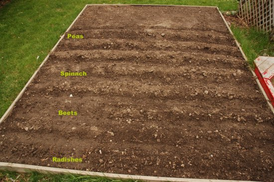 Vegetable garden as of May 15, 2009.